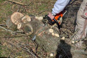 Baumschnitt Garten Pflege