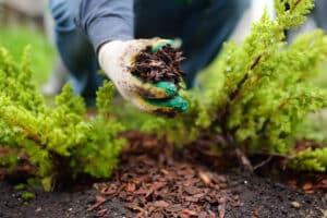 Gartenpflege Rindenmulch auftragen