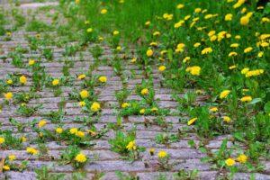 Garten Unkraut entfernen Klissenbauer